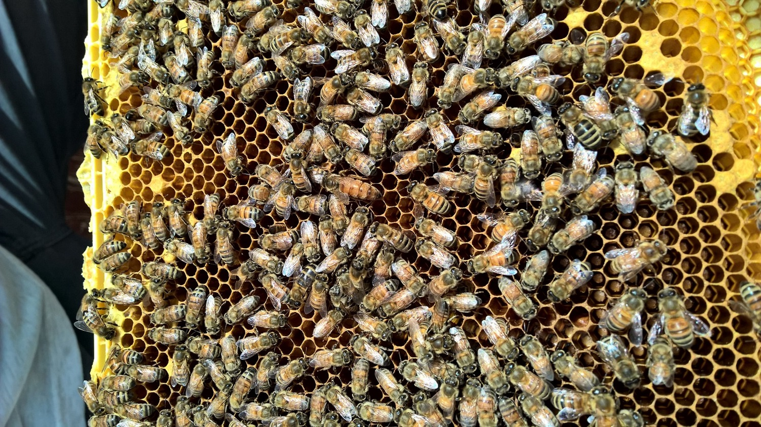find the Queen
